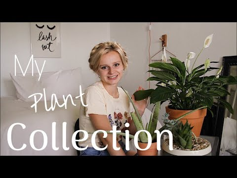 My Plant Collection! (tips & trick to not kill your plants) | Jacqueline DuBois