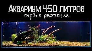 Растения в аквариуме 450 литров
