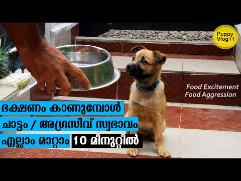 Dog food aggression food excitement problems solved in 10 minutes | Dog Training