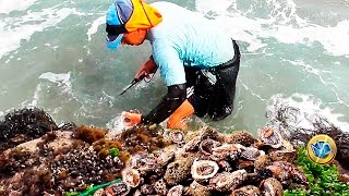 SACANDO MARISCOS✔ 【Chanques│Tolinas】 Taking out the rich seafood