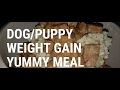 How To Help Your Dogs or Puppies Gain Weight With Cheap Simple Feeding