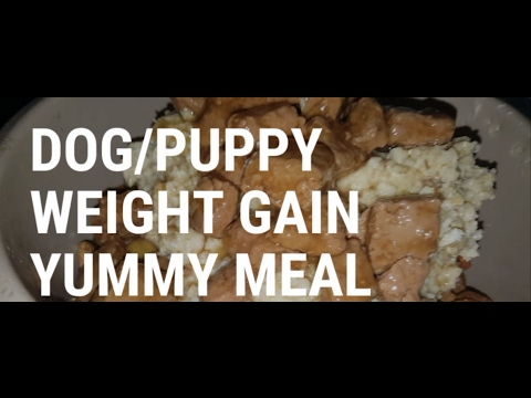 How To Help Your Dogs or Puppies Gain Weight With Cheap Simple Feeding #DogFeeding #WeightGain