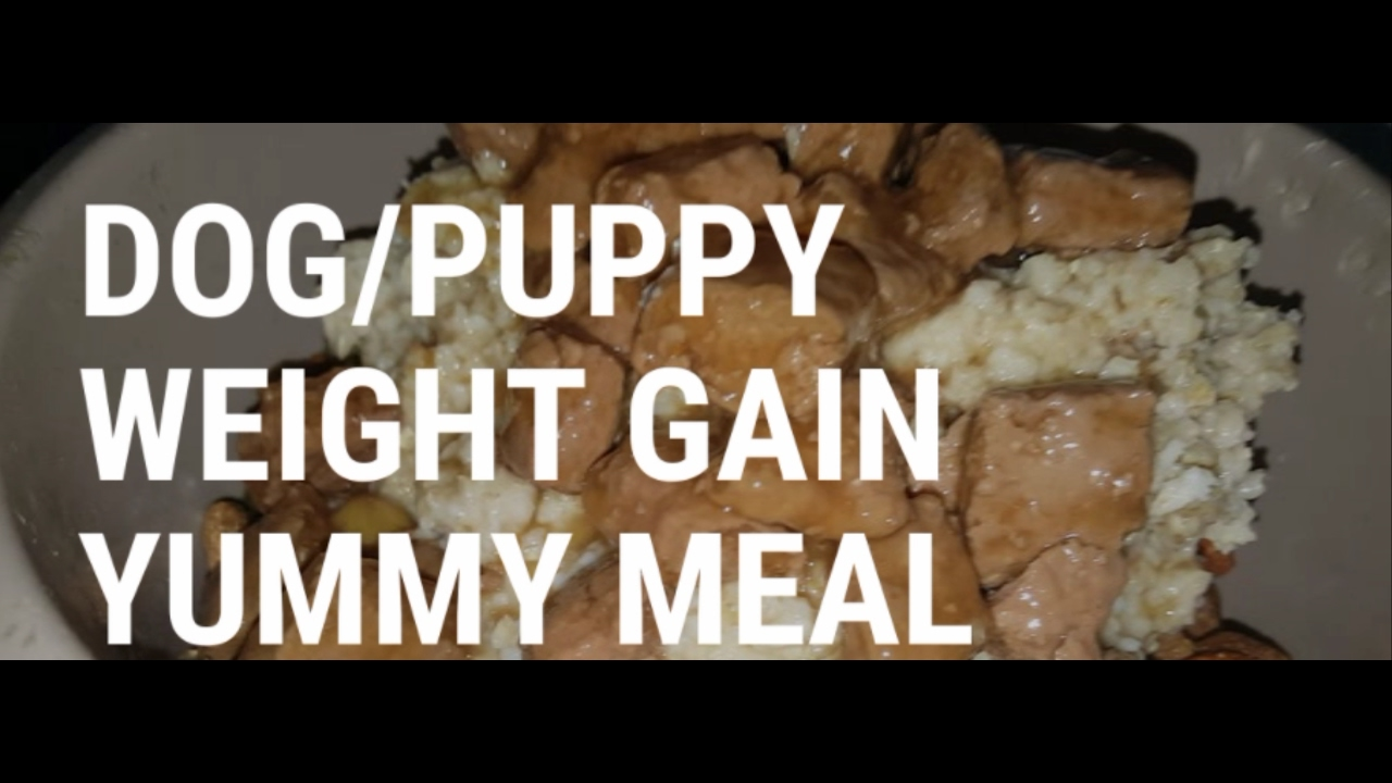 How to help your dogs or puppies gain weight with cheap simple how to help your dogs or puppies gain weight with cheap simple feeding forumfinder Image collections