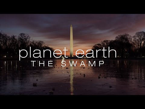 Planet Earth: The Swamp