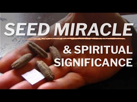 ╫ The 2000 Year Old Miracle Seed From Israel That Grew