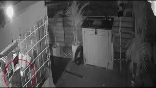 כלב הצית שריפה בבניין מגורים בקריית גת - תיעוד ממצלמות האבטחה