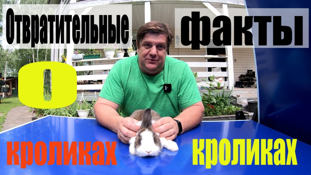 Отвратительные факты о кроликах