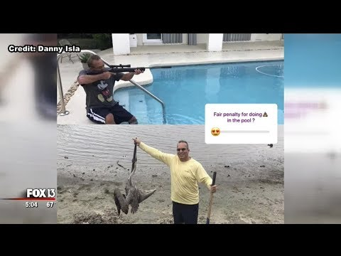 St. Petersburg man apologizes for social media post about dead pelican