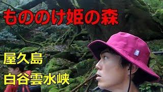 もののけ姫の森 屋久島「白谷雲水峡」苔むす森~太鼓岩