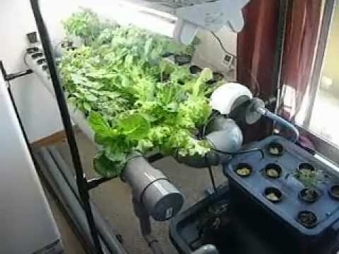 indoor hydroponic garden update YouTube