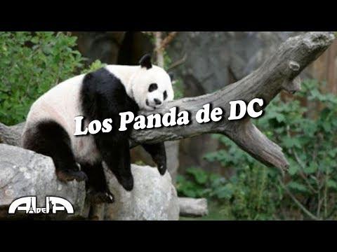 Smithsonian National Zoo - Washington DC #4