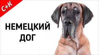 Немецкий дог - породы собак.