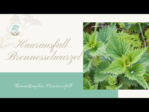 Brennesselwurzel Haarausfall - Ellen Langstein