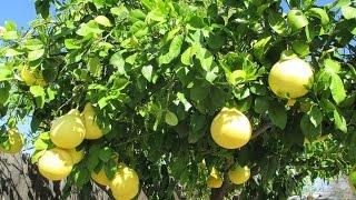 Liên khúc * Lý bông mai - Nhớ em lý bông mai - Tự tình lý cây bông
