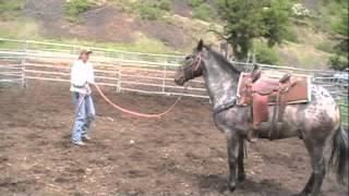 Reno the problem horse Part 1