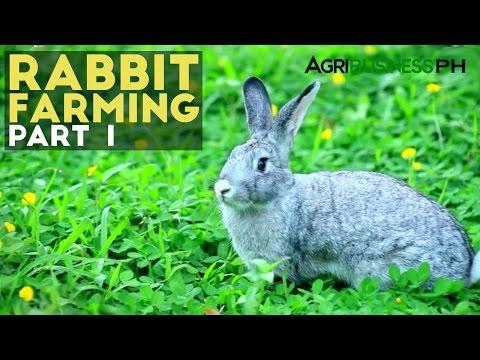 Rabbit Farming Part 1 : Rabbit Farming in the Philippines | Agribusiness Philippines