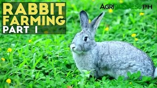 Rabbit Farming In The Philippines- Agribusiness Season 1 Episode 6 Part 1