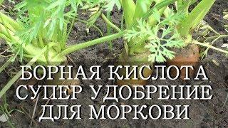 видео Морковь