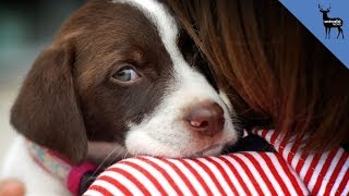 Your Dog Can Tell When You're Sad