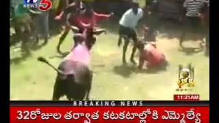Pongal Festival   Jallikattu Bull Fight in Tamil Nadu