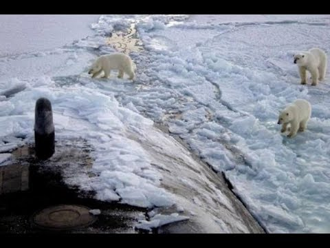 Polar Bears and Nuclear Submarines | Mini Ice Age 2015-2035 (564)