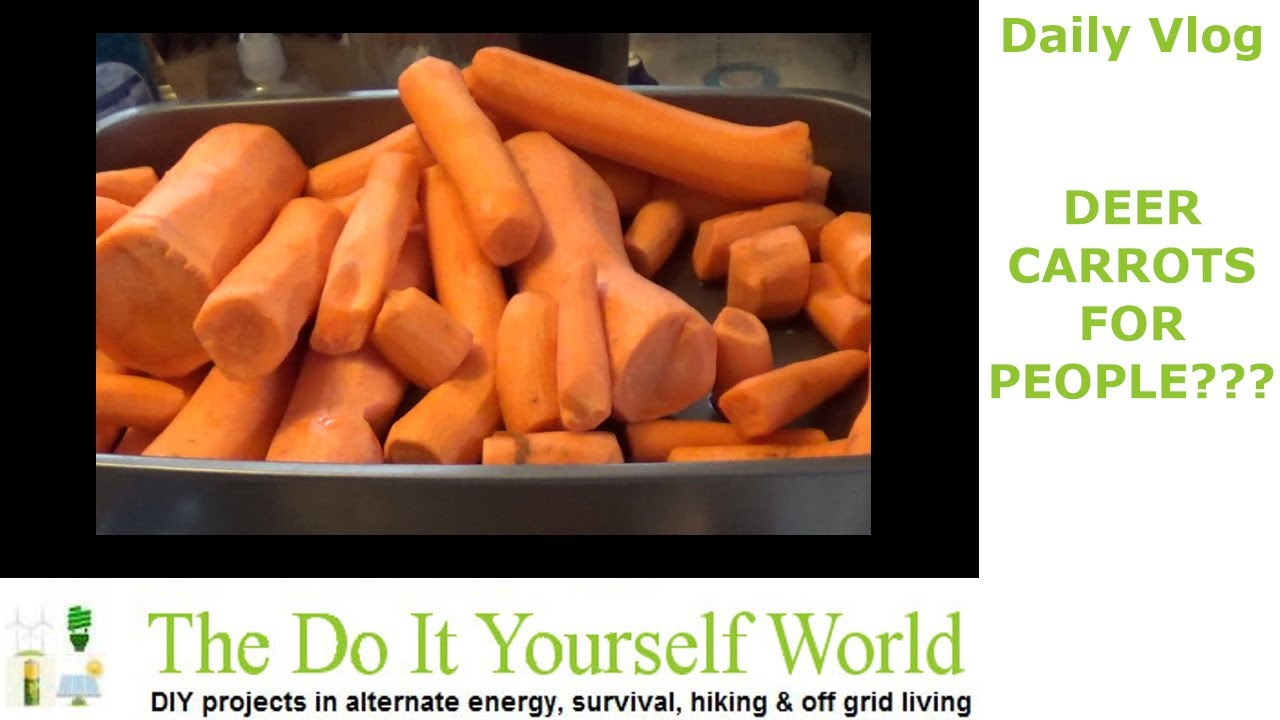 Processing Cheap Deer Feed Carrots For Winter Homestead Use
