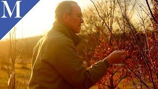 Growing Truffles in Missouri.mov