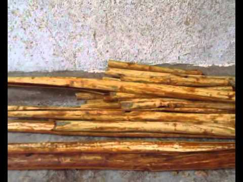 a history and industry of cinnamon in sri lanka Cinnamon is the dried bark of the perennial tree of czeylanicum of the lauraceae family true cinnamon is native to sri lanka.