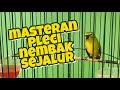 Masteran Pleci Nembak Sejalur  Mp3 - Mp4 Download
