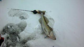 Рыбалка на балансир Кубенское озеро Бонус судак