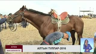 Победителем турнира по аламан байге Алтын тулпар 2016 стал 13 летний Асхат Алимжанов