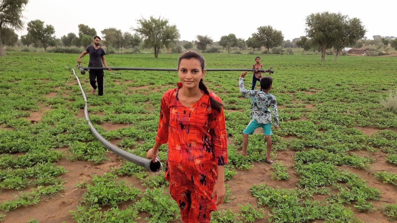 मेरे गांव का खेत ❤️ Mere Ganv Ka khet उत्तर पश्चिमी राजस्थान भारत #life #village #people