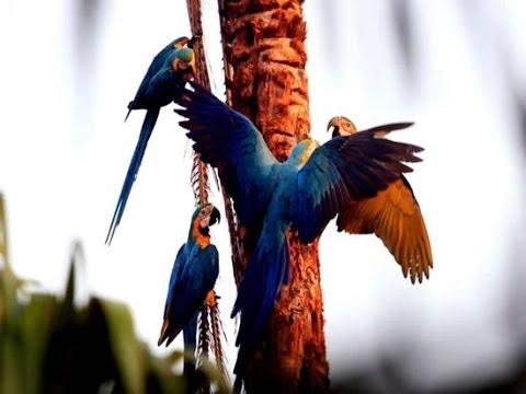 Amazing Natural, Bird  Sounds