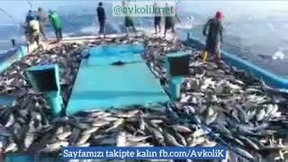 Balık böyle tutulur