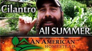 How To Grow CILANTRO ALL SUMMER LONG! NO BOLTING! EVER!