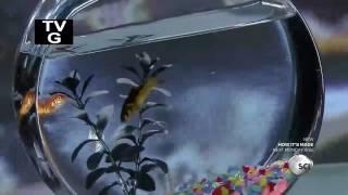 How Its Made - Aquarium Fish