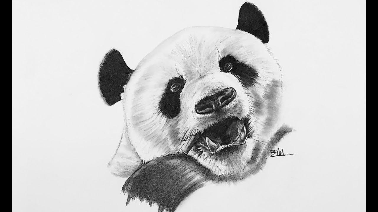 Картинки для начинающих карандашом панд