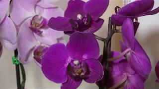 012. Самые красивые цветы - Орхидеи на YouTube
