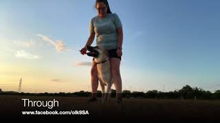 "German Shepherd ""Kaizer"" 