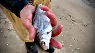 Рыбалка на Донскую Тарань Рыба идет полным ходом