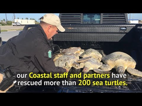 Sea Turtles Rescued - Texas Parks and Wildlife Department