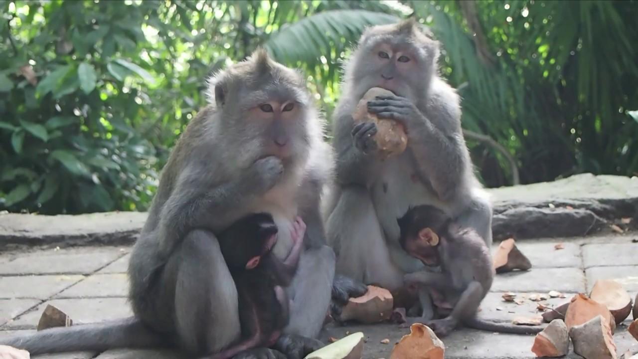 Naughty monkeys 92