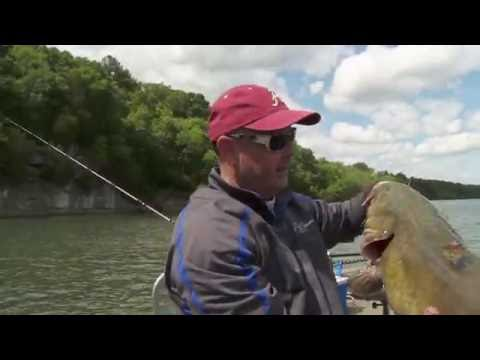 Bait Clicker Tip for Huge Flathead Catfish