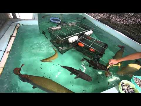 15t コンクリート水槽☆大型魚ピラルク�