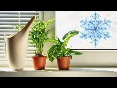 Правильная подготовка комнатных растений к зимовке.