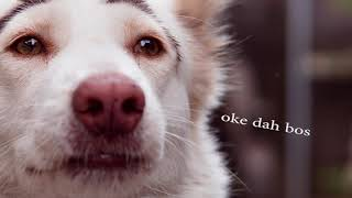 reaksi gero dan kawan saat melihat anjing baru tetangga yang katanya lebih imut dan lucu# doglover #funnydog #anjinglucu#parody.