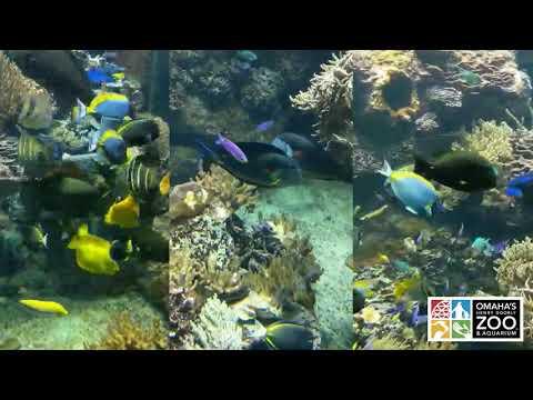 Fish Cam Friday | Omaha's Henry Doorly Zoo and Aquarium