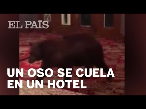 Un oso consigue entrar en un hotel de Colorado y camina a sus anchas por la recepción