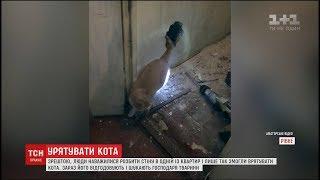 У Рівному дві доби рятували кота, який провалився у вентиляційну шахту багатоповерхівки