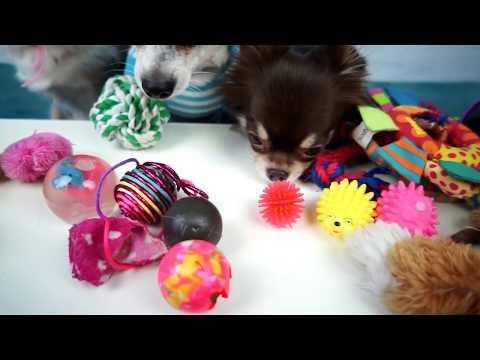 МИСТЕР МАКС Вызов Принят! Обзор игрушек собаки, Собака Блогер Пародия, собачий блог Меджик Фемили